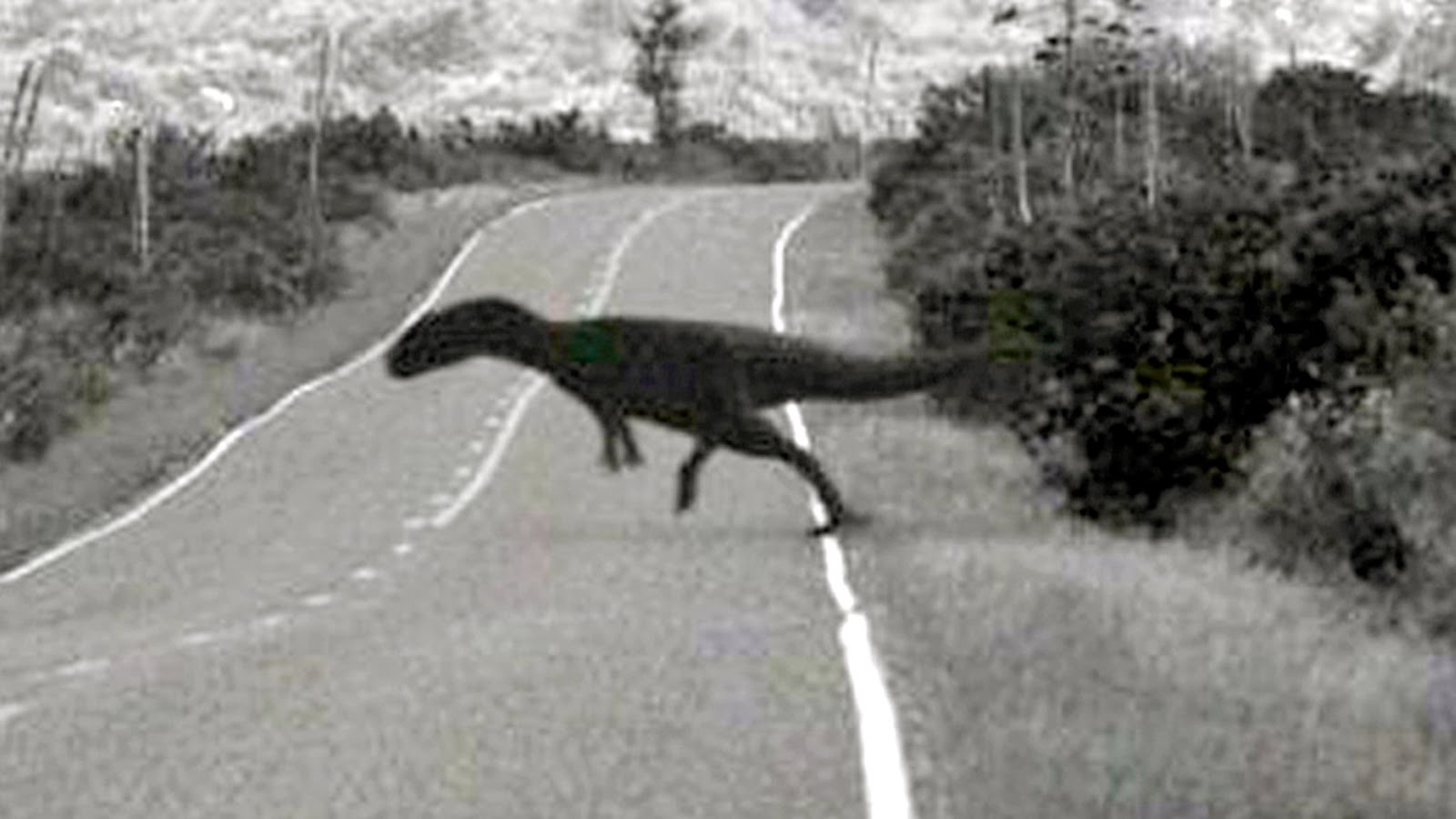 Dinozauri fotografiaţi pretutindeni