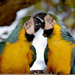 O fosilă de papagal descoperită în Scandinavia