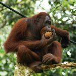 Mai mult de jumătate dintre animalele sălbatice au dispărut