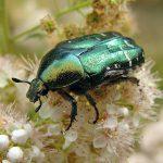 Sosesc insectele ciborg!