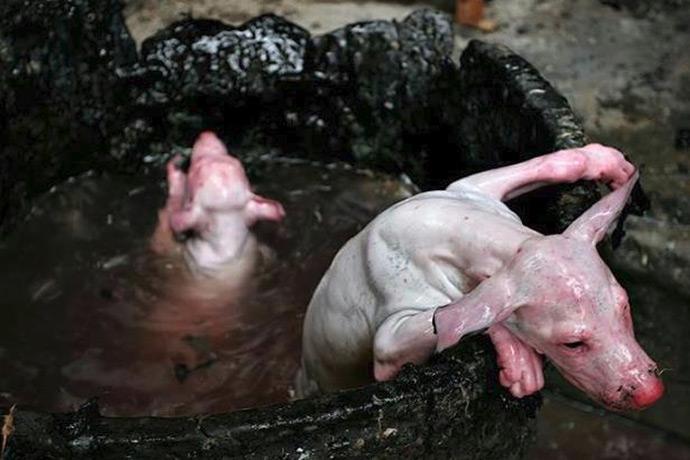 Festivalul câinilor şi pisicilor de la Yulin, China, va face mii de victime