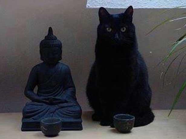 Poveste zen despre semnificaţia religioasă a legării fedeleş a pisicii